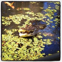 Photo taken at Cajun Encounters Honey Island Swamp Tour by Eileen J. on 11/3/2011
