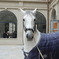 Photo taken at Spanish Riding School by ViennaInfo on 3/23/2012