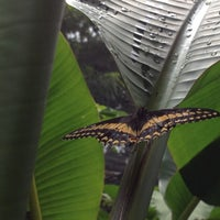 Photo taken at Mariposario Vuelo Supremo by Betsabé S. on 6/17/2012