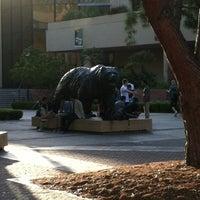 รูปภาพถ่ายที่ UCLA Bruin Statue โดย Ted T. เมื่อ 6/8/2012