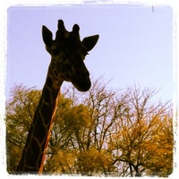 Photo taken at Reid Park Zoo by Alexandra W. on 3/2/2012