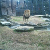 Photo taken at George H. Carroll Lion Habitat by Bobby C. on 12/12/2011