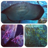 Photo taken at SEA LIFE Melbourne Aquarium by Linna P. on 10/27/2011