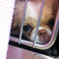 Photo taken at Veterinary Medical Clinic by Madison M. on 12/3/2011