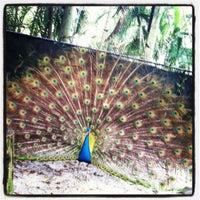 Foto scattata a Palm Beach Zoo da Jamie Nicole il 3/4/2012