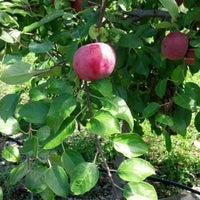 Photo taken at Minard Farms Apple Growers by Renee G. on 9/9/2012