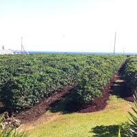 Photo taken at Kauai Coffee Plantation by The R. on 5/5/2012