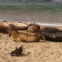Foto tirada no(a) Seal Rocks por  ℋumorous em 3/31/2012