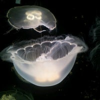 Photo taken at Shaw Ocean Discovery Center by glenn l. on 8/10/2012
