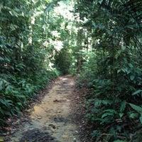 Das Foto wurde bei MacRitchie Nature Trail von Rachel C. am 7/7/2012 aufgenommen