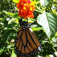 ... Photo Taken At Butterfly Garden   Leu Gardens By Heather R. On 6/28 ...
