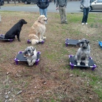 Photo taken at The Dog Wizard Group Class @ Reedy Creek Park by Paul D. on 2/11/2012