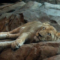 Photo taken at Milwaukee County Zoo by Cyn L. on 7/3/2012