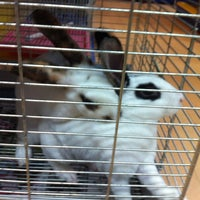 Photo taken at Qian Hu Pet Shop by Grangmother on 9/5/2012