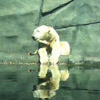 Photo taken at Polar Bear Odyssey At Como Park by Katie Z. on 9/6/2011