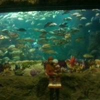 Photo taken at SeaWorld Indonesia by Thifatul Ikhsan S. on 1/31/2012