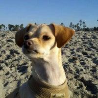 Photo taken at Ocean Beach Dog Beach by Sean S. on 11/27/2011