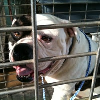 Photo taken at Town Lake Animal Shelter by Karrie L. on 8/3/2011