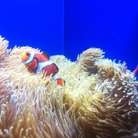 Photo taken at Birch Aquarium At Scripps Institution of Oceanography by Yao M. on 7/9/2011