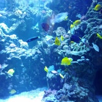 Photo taken at Aquarium of The Pacific by Daniel S. on 2/25/2012
