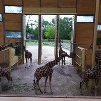 Photo taken at Giraffen by Rene V. on 7/29/2011