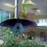 Charmant ... Photo Taken At MOSI   BioWorks Butterfly Garden By Kristen G. On 8/23  ...