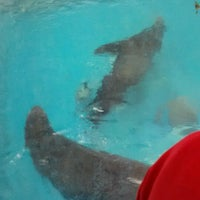 Photo taken at Como Zoo - Seal House And Show by NDeia G. on 6/13/2012