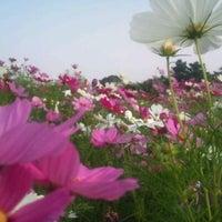 Foto tomada en Uminonakamichi Seaside Park por masanori t. el 10/9/2011