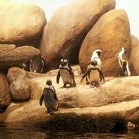 Photo taken at Penguin Tank by Rjahja C. on 4/5/2012