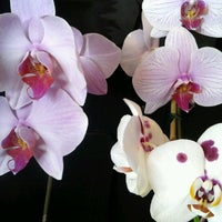 Photo taken at The Family Flower Shoppe by Sara S. on 1/7/2012