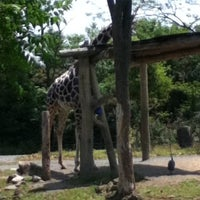 Photo taken at Tennoji Zoo by ヒビキ on 5/16/2012