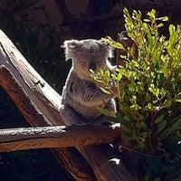 4/10/2011 tarihinde MattersOfGrey.comziyaretçi tarafından Koala Exhibit'de çekilen fotoğraf