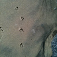 Photo taken at Huntington Dog Beach by Mel D. on 4/23/2011