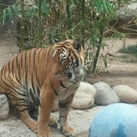 Photo taken at Reid Park Zoo by Ricky W. on 4/12/2012