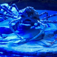 Photo taken at Sea Life Aquarium by Paul O. on 9/8/2011