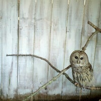 Photo taken at ZooQuarium by Shaundra B. on 7/16/2012