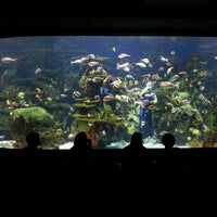 Photo taken at Ripley's Aquarium by Lisa K. on 8/25/2012