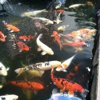 Pet Paradise in Pueblo | Pet Paradise 1115 Pueblo ...