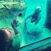 Photo taken at Rocky Shores at Hogle Zoo by Nanci M. on 6/18/2012