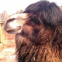 Das Foto wurde bei Зоопарк «Лимпопо» von Oleg Z. am 4/15/2012 aufgenommen