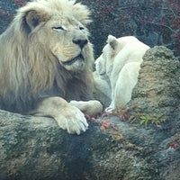 Photo taken at Philadelphia Zoo by Jill C. on 10/21/2011