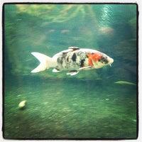 Das Foto wurde bei Kölle Zoo von Peter am 7/14/2012 aufgenommen