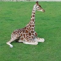 Photo taken at Giraffen by Edwin B. on 8/17/2011