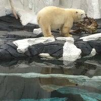 9/17/2011 tarihinde Herman (JJ) B.ziyaretçi tarafından Wild Arctic'de çekilen fotoğraf