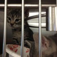 Photo taken at Edison Animal Shelter by Daria W. on 9/1/2012