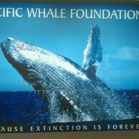 Photo taken at Pacific Whale Foundation by Ryan M. on 3/9/2011