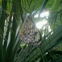 Photo taken at Butterfly Pavilion by Chris R. on 9/28/2011