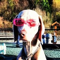 Photo taken at Edmonds Off-Leash Dog Park by Nicole R. on 3/24/2012