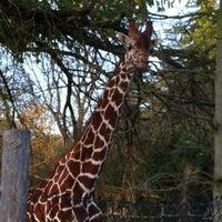 Photo taken at Giraffen by PETER👑 on 11/5/2011