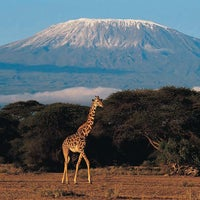 Photo taken at Mount Kilimanjaro by Giacomo M. on 8/24/2012